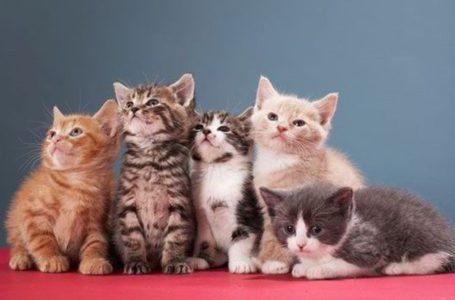 Comelnya Awak! 10 Baka Kucing Paling Menawan Di Dunia