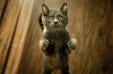 Kucing Bergaduh! Apa Nak Buat Ni?