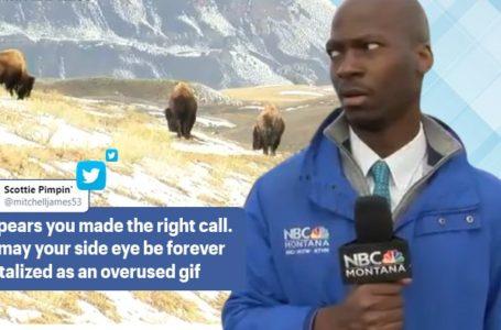 Tau Cuak! Wartawan Sedang Buat 'Live' Kecut Perut Didatangi Bison. Kelakar Habis!