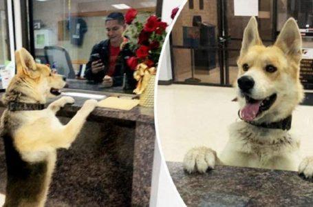 Bijak Dan Comel! Anjing Masuk Balai Buat Laporan