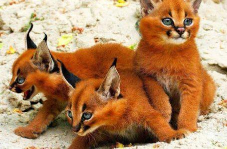 10 Kucing Paling Terkenal Yang Mempunyai Jutaan Pengikut Instagram Di Seluruh Dunia