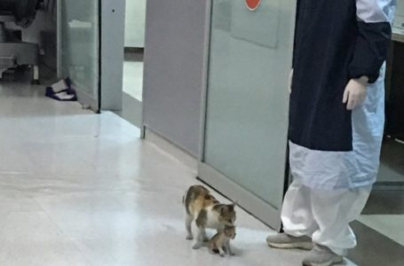 Alahai Pandainyer! Ibu Kucing Bawa Anaknya Ke Hospital Untuk Mendapatkan Rawatan