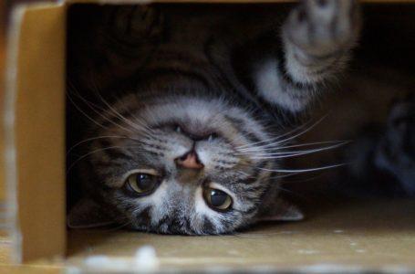 15 Fakta Tentang Kucing Yang Perlu Diketahui