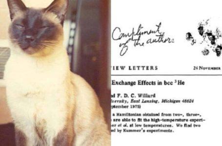 Kucing Paling Bijak Di Dunia, Siap Ada Kertas Kajian Saintifik Lagi