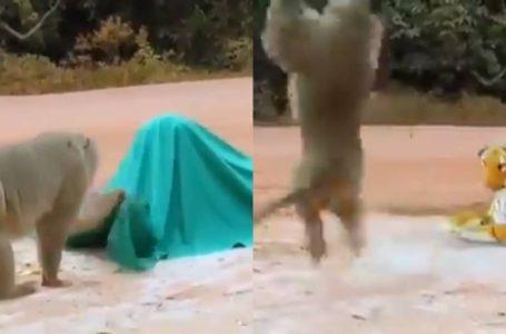 'Terkejut Beruk' Yang Betul, Video Prank Haiwan Buat Netizen Faham