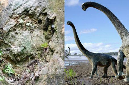 Penyelidik Jumpa Fosil Tapak Kaki Bukti Dinosaur Pun Dah Sampai Kelantan
