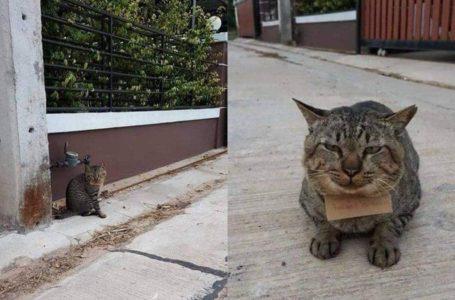 3 Hari Tak Balik, Meow Bawa Senarai Hutang Tumpang Penginapan & Makan