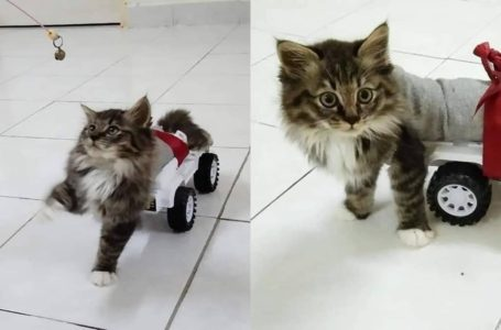 Kucing Tak Boleh Jalan, Tengok Apa Tuan Dia Buat