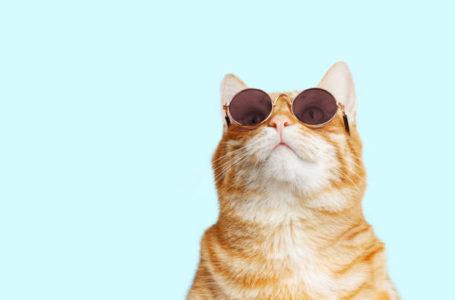 Teringin Nak Bela Kucing?? Tips Penjagaan Kucing Sebagai Haiwan Peliharaan!