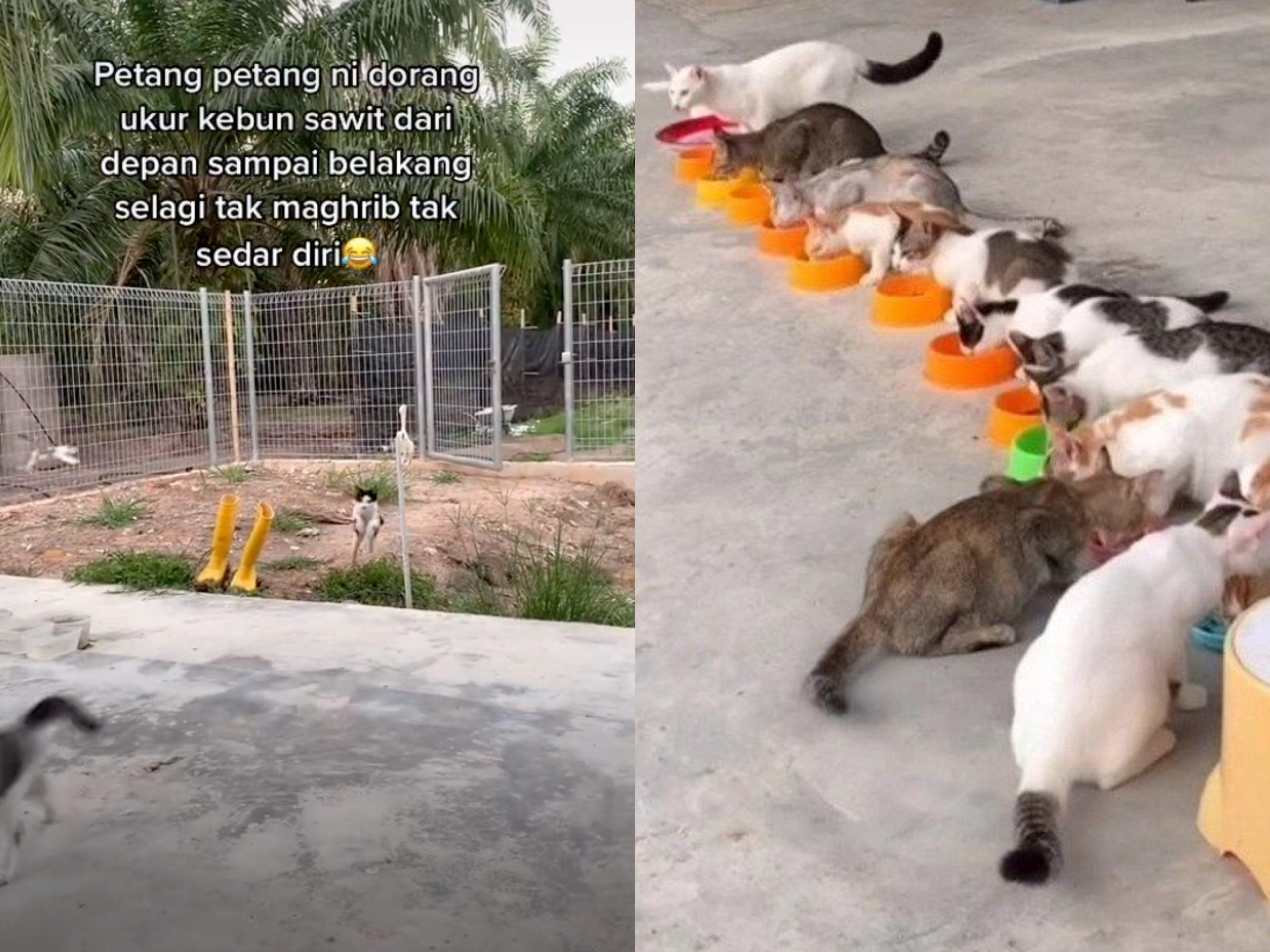 Ingatkan Seekor Kucing Je Yang Datang! Sekali Berpusu-pusu Siap Beratur!