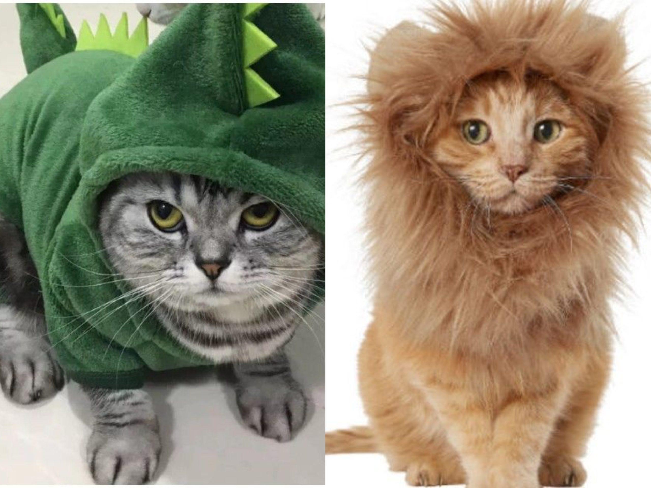 Kucing-Kucing Dalam Kostum! Tak Sangka Lucu dan Comel Sangat Dibuatnya!